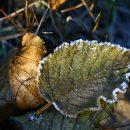 В Астраханской области ожидаются ночные заморозки