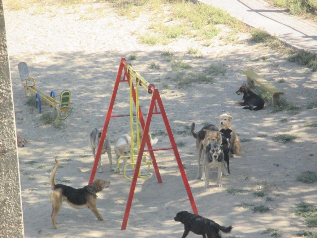 Жительница астраханского села показала фото своей улицы после отлова собак
