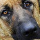 В Астрахани полицейская собака нашла пропавший планшет