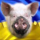 Прозрение украинского патриота: «мы – свиньи…»