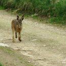 В Астраханской области открывается сезон охоты на пушного зверя, степную и полевую дичь