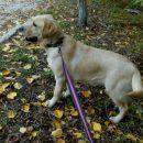 Астраханская собака-спасатель названа самой профессиональной в Южном федеральном округе