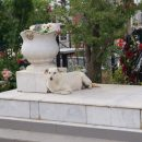 На Астраханском кладбище собака живет у могилы хозяина