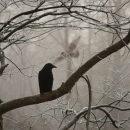 В Астраханской области разрешили отстреливать ворон