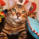 Астраханка сняла на видео смешного говорящего кота