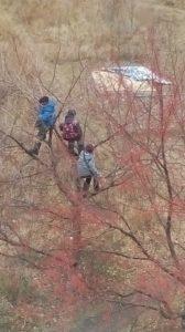В Астрахани сняли на фото застрявших на дереве детей