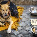 Астраханский губернатор в год собаки пообещал приют для животных