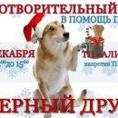 В Астрахани пройдет акция помощи животным приюта «Верный друг»