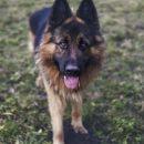Сегодня в Астрахани собака загрызла маленькую девочку на смерть