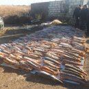Тонну контрабандной осетрины нашли силовики в Астраханской области