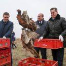 В Астраханской области выпустили в дикую природу 100 птенцов фазана