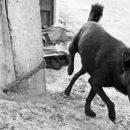 На севере Астраханской области местные жители ловят отравителей собак