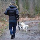 В Астрахани мужчина, гулявший с собакой, задержал воров