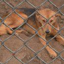 В Астрахани пройдет акция по сбору корма и лекарств животным приюта