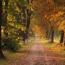 Какие парки и скверы, по мнению астраханцев, нуждаются в благоустройстве
