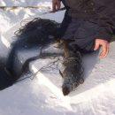 В Астрахани с дрейфующей льдины сняли мужчину