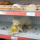 Новость об астраханском предприимчивом коте оказалась уткой