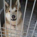 Астраханская полиция арестовала собаку-хулиганку