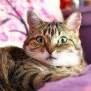 Астраханские учителя спасли кошку от смерти