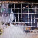 Астраханские пограничники задержали подозрительных голубей