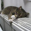 Астраханцы жалуются губернатору на отсутствие отопления в квартирах