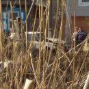 В Астрахани «шестерка» протаранила электрический столб