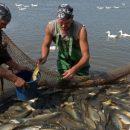 Астраханцев предупреждают о паразитах в рыбе