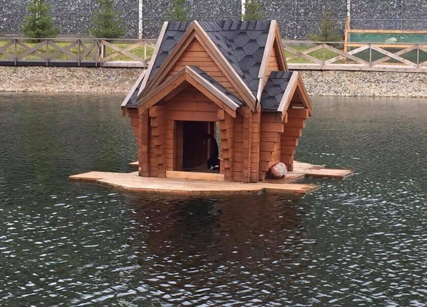 Домик для лебедей на озере в Астрахани переделают под влиянием соцсетей