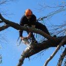 Астраханскому губернатору пожаловались опасные деревья