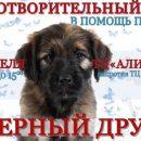 Астраханский приют для животных просит о помощи