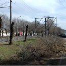 В Астрахани обрубили ветки вязов для размещения рекламного щита