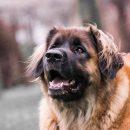 В Астрахани агрессивная собака держала в страхе жильцов многоквартирного дома