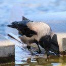 В Астраханской области из-за нефти в воде погибли птицы