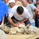 В Астрахани овечьи цирюльники показали класс
