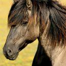 С астраханских улиц убирают лошадей