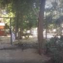 В Астрахани упавшее дерево серьезно повредило нос сотруднику коммунальной службы