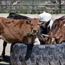Астраханец обещал отблагодарить сотрудника ФСБ, если тот закроет глаза на скот