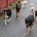 На улицах Астрахани отловили 18 агрессивных псов