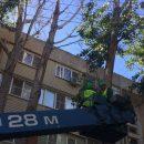 В Астрахани из-за агрессивной вороны спилили дерево