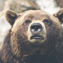 В волгоградском цирке медведь на глазах у зрителей кинулся на дрессировщика