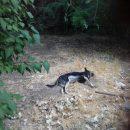 В Астрахани живодеры травят уксусом собак и кошек