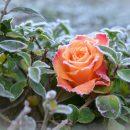 На Астраханскую область надвигаются заморозки