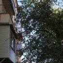 В Астрахани активно ликвидируют сухостой