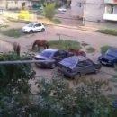 В Астрахани во дворе многоэтажки поселились лошади