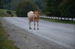 В Астрахани снова кони и коровы попадают в криминальные сводки