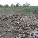 Под Астраханью нашли свалку с биоотходами