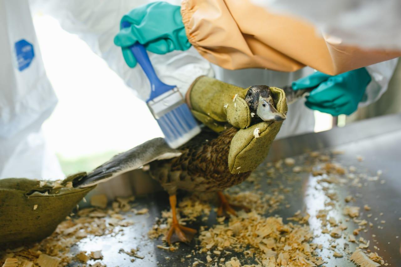 Астраханские студенты спасали птиц от условного разлива нефти