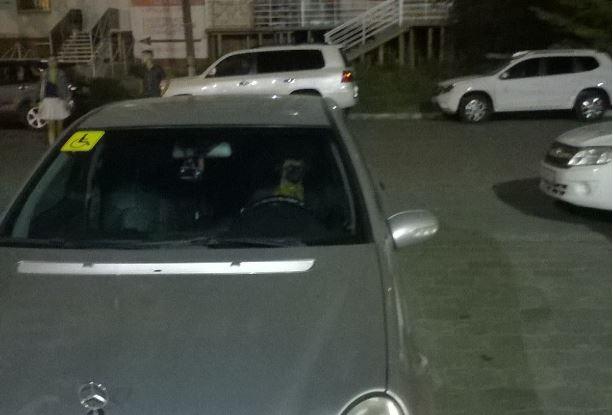 В Астрахани собаки сели за руль