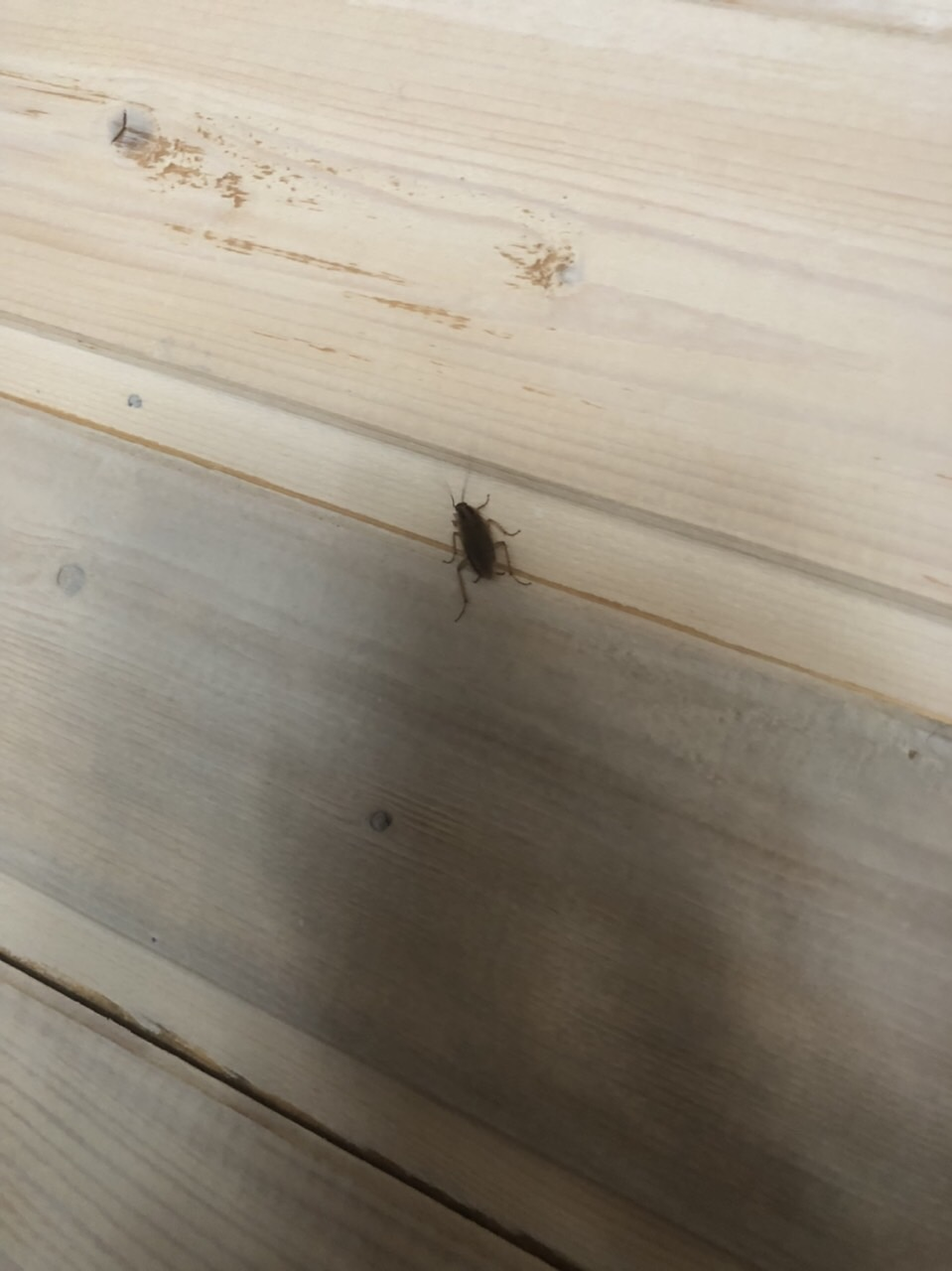 Мыши и тараканы пугают посетителей астраханских ресторанов
