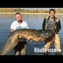 Рыбаки показали видео вылова 87 килограммового сома и рассказали что сделали с гигантом
